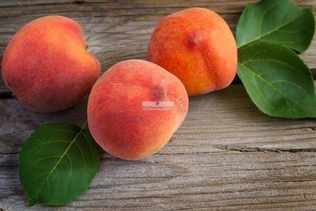 Brzoskwinia Reliance (Prunus Persica Reliance)