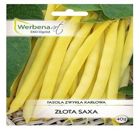 Fasola zwykła - karłowa Złota Saxa (Phaseolus vulgaris L.) 40g