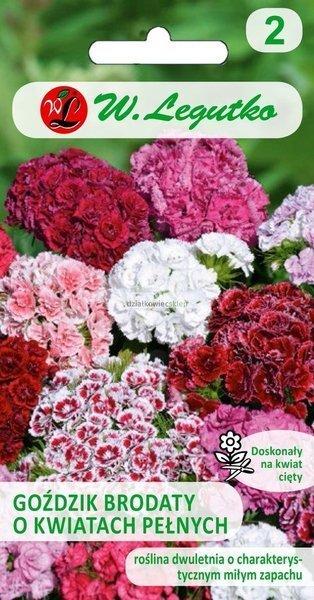 Goździk brodaty o kwiatach pełnych - mieszanka  (0,5 g)