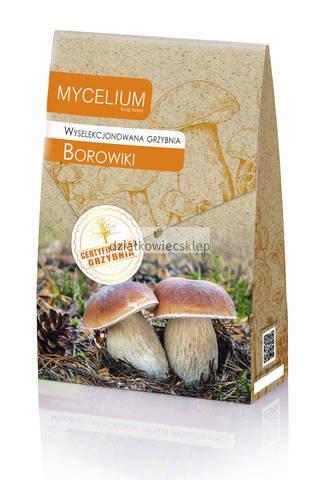 Grzybnia Borowika 120 ml