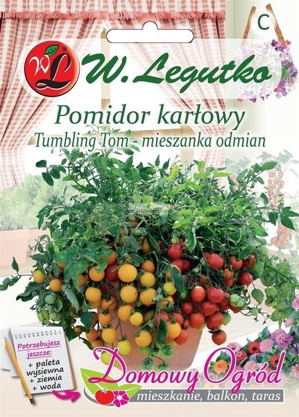 Pomidor gruntowy karłowy Thumbling Tom (0,2 g) - Domowy Ogród