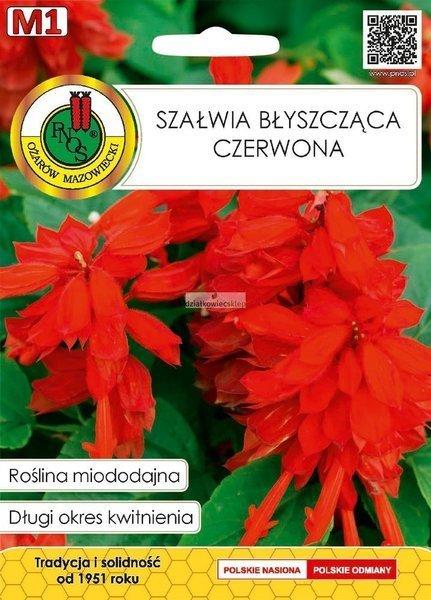 Szałwia błyszcząca czerwona (0,5 g) - Roślina Miododajna