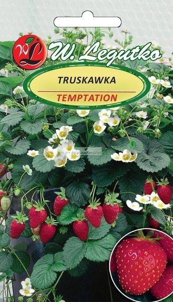 Truskawka Temptation do pojemników (0,03 g)